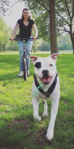 steppen hond kynocompany