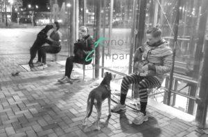 bootcamp hond kynocompany