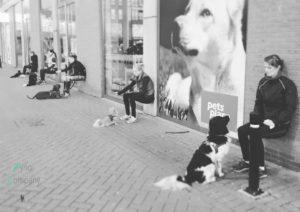 hond bootcamp