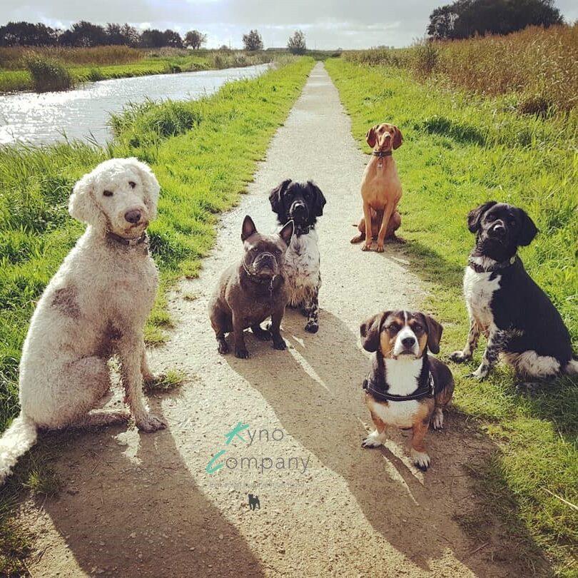 hondenuitlaatservice kynocompany groepsfoto vlasgat