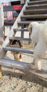 hondenuitlaatservice kynocompany